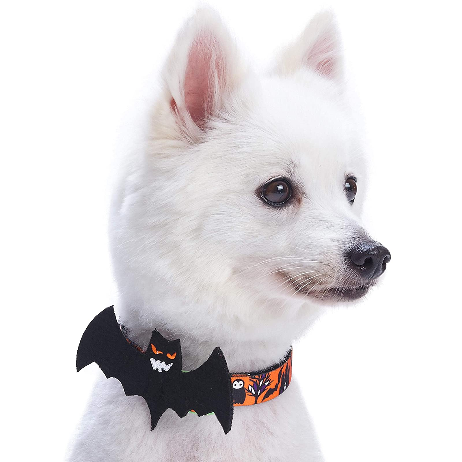 Blueberry Pet 8 Patterns Halloween Mystery Disguise - 2