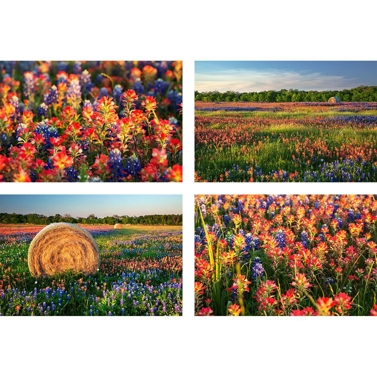 Amazon Com Texas Wildflowers Print Set Wildflower Fields Of