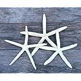 "Finger Starfish | 3 Extra Large White Finger Starfish 8""-10"" | Plus Free Nautical eBook by Joseph Rains"