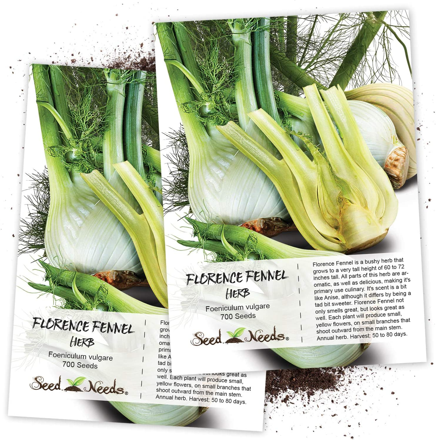 Seed Needs, Florence Fennel Herb (Foeniculum vulgare) Twin Pack of 700 Seeds Each Non-GMO