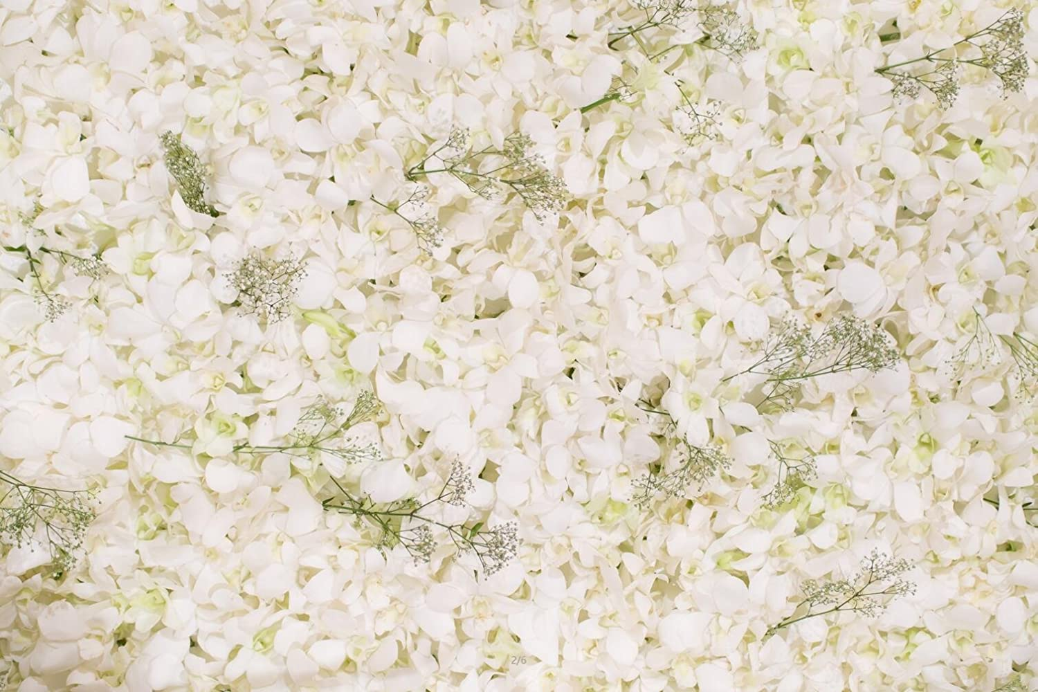 Floral Wall Photography Backdrops Beautiful White Flowers