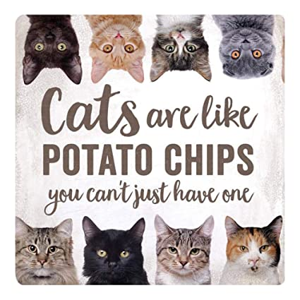 360422a89 Amazon.com: P. Graham Dunn Cats Like Potato Chips Can't Have Just One White  3 x 3 Wood Refrigerator Magnet: Electronics