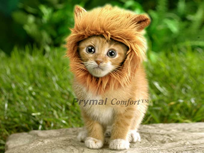Amazon.com  Prymal Lion Mane Dog Cat Costume. This Pet Costume Turns Your Cat or Small Dog Into a Ferocious Lion King! (Please be aware of fake products ... & Amazon.com : Prymal Lion Mane Dog Cat Costume. This Pet Costume ...