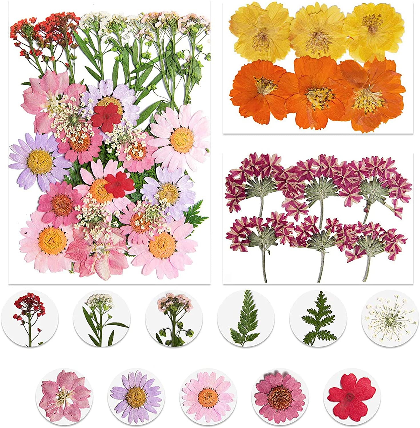 2 Pack Pressed Flowers Real Dried Flowers DIY Decor Floral Arts Resin Crafts