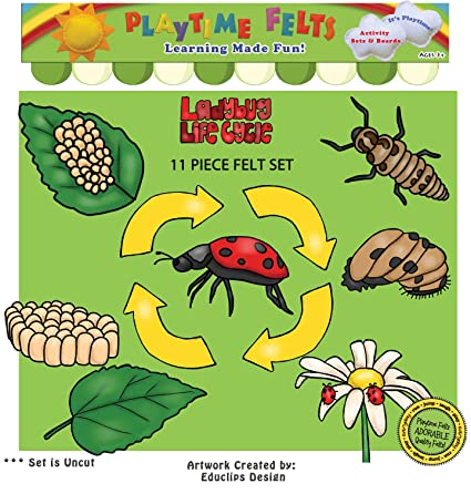 amazon com ladybug life cycle felt board figures uncut toys games