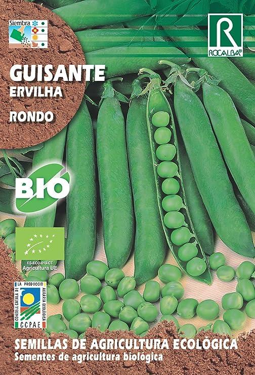 Semillas ECOLOGICAS Guisante Rondo 30 Gr.: Amazon.es: Jardín