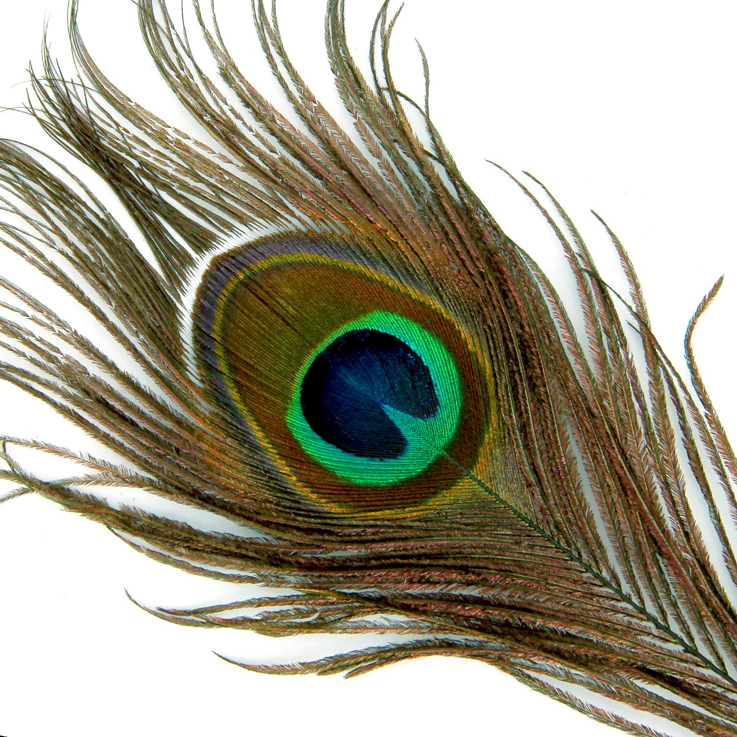 Blisstime High Quality Natural Peacock Feathers 10-12 30 by Blisstime
