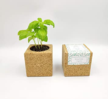 outlet on sale great prices latest design Grow Cube aimanté (Tournesol): Amazon.fr: Jardin