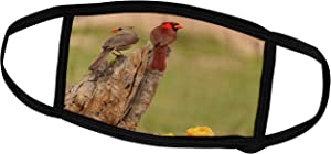3dRose USA, Texas, Hidalgo County. Cardinal Pair on Stump Near Prickly. - Face Masks (fm_190634_2)
