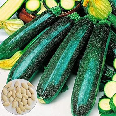 Lx10tqy 10Pcs Climbing Summer Squash Zucchini Seeds Nutritious Vegetable Garden Plant - Zucchini Seeds : Garden & Outdoor
