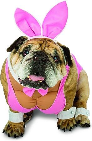 Disfraz de conejita playboy para perro: Amazon.es: Juguetes y juegos