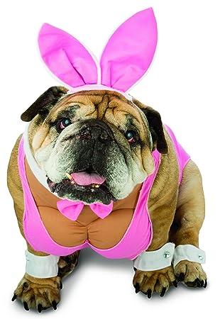 Disfraz de conejita playboy para perro: Amazon.es: Juguetes ...
