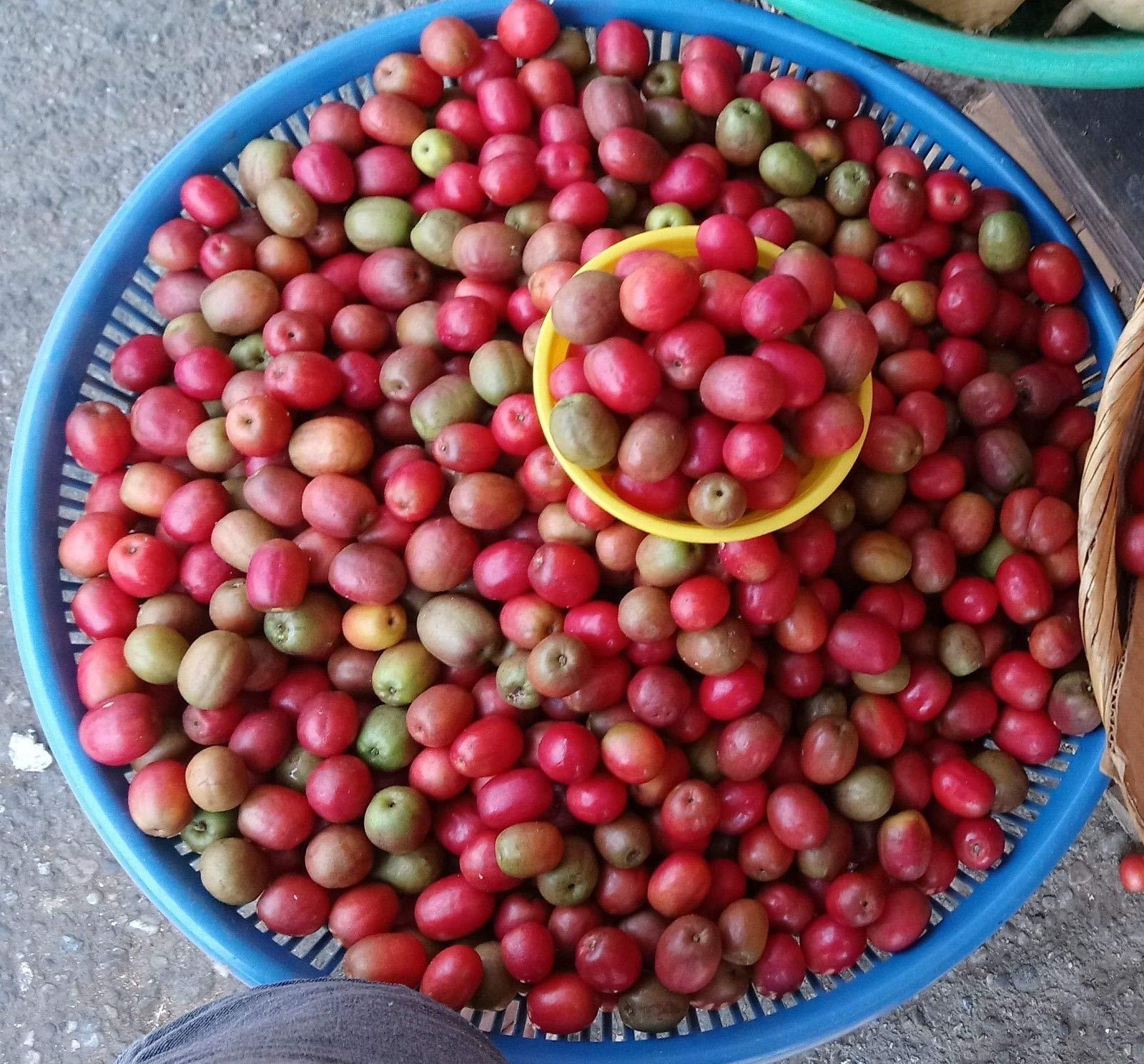 10 Seeds spondias purpurea (jocotã¨). Season 2018 Rare Fruit