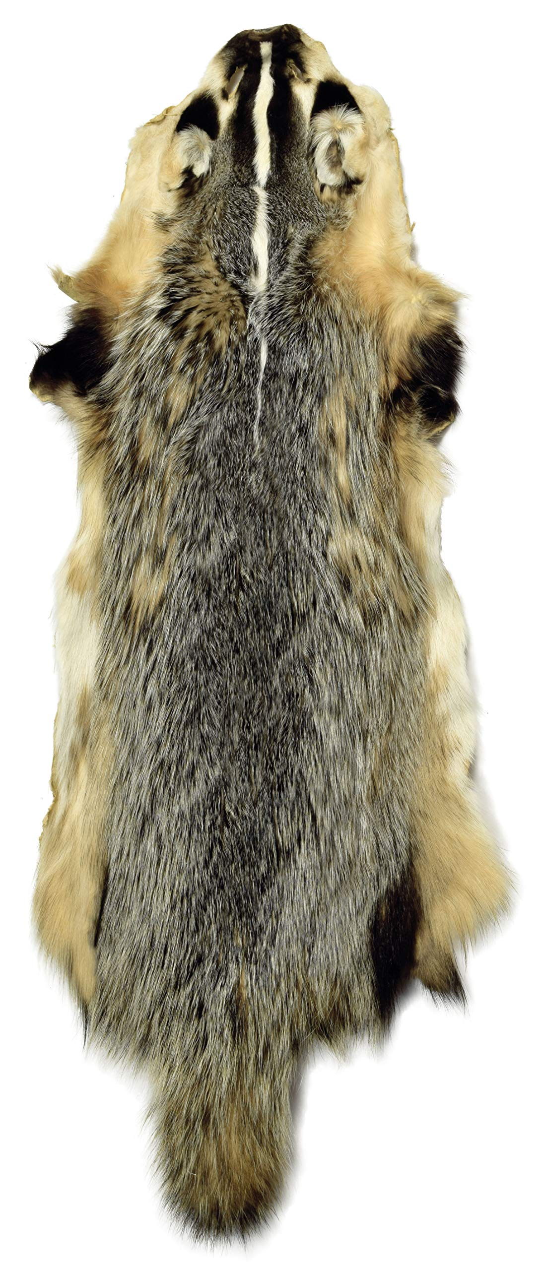 Professionally Tanned Badger Fur Pelt with Tail - 1 Pelt by AuSable Fur