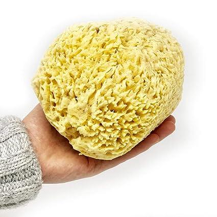 Honeycomb - Esponjas de mar naturales orgánicas, de la región del mar Egeo