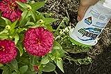 RoundUp Precision Gel Weed & Grass Killer 5 OZ