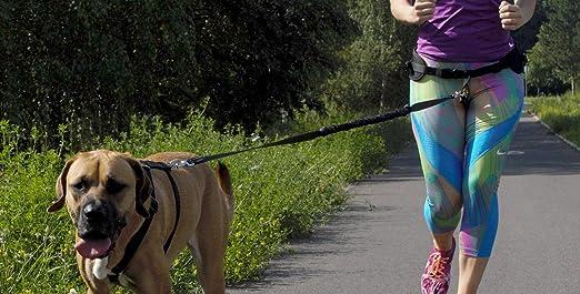 Dingo Shock Absorber Correa Ganchos para Running con un Perro, 2,5 ...