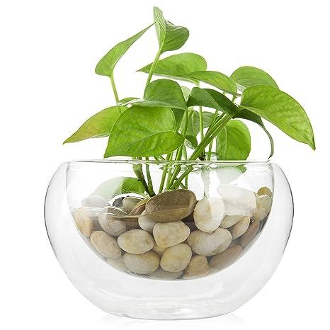 Superb 7 Inch Double Walled Glass Planter Bowl Decorative Tabletop Succulent Plant Vase Interior Design Ideas Apansoteloinfo
