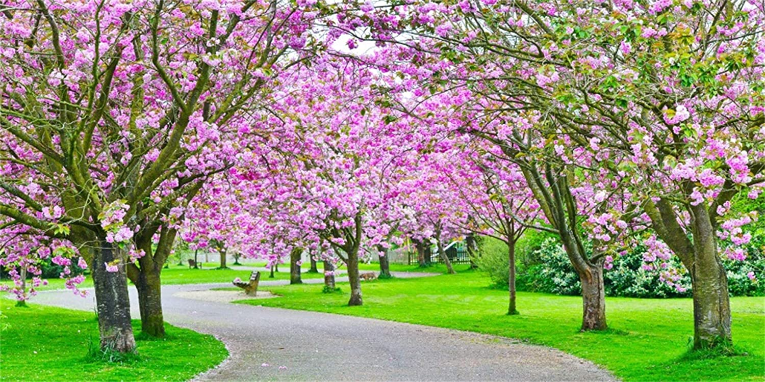 Laeacco 20x10ft Spring Blooming Trees Path Backdrop Vinyl Graceful Garden Cherry Blossom Green Grassland Photography Background Wedding Photo Booth Bride Portrait Shoot Spring Scenic Landscape Poster