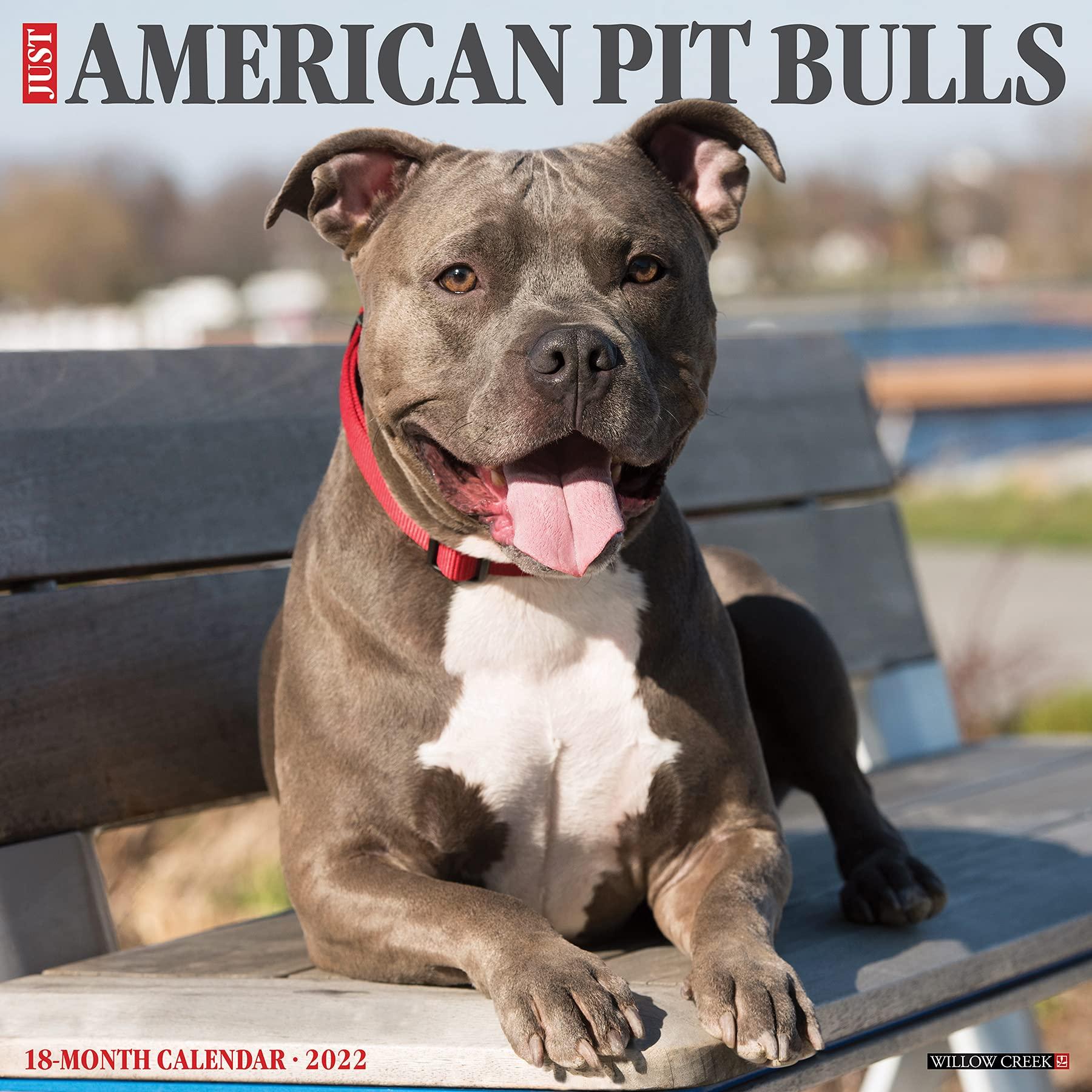 american pitbull calendar