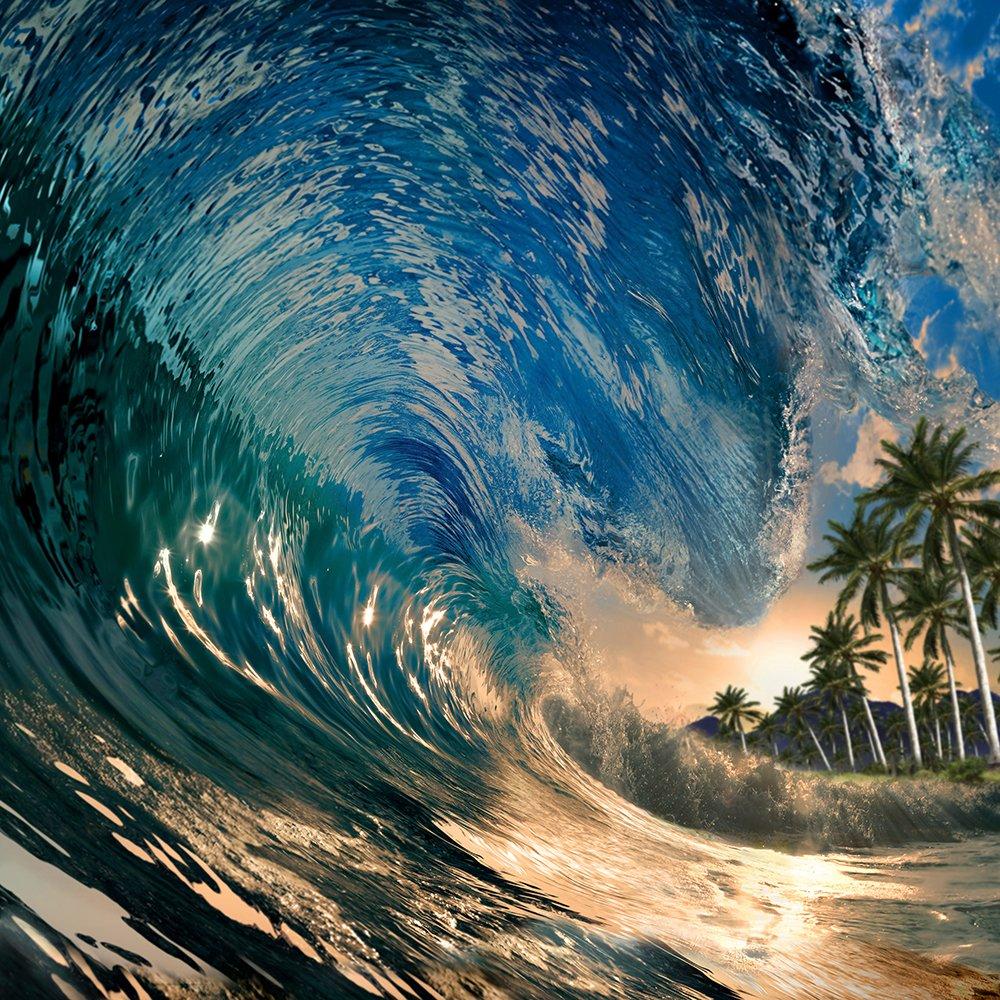 トロピカルBackdrop – Ride the Wave – 8 x 8 ft。シームレスなファブリック   B0764P3QN4