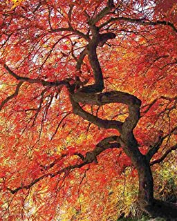 product image for Springbok Puzzles - Colorful Canopy - 500 Piece Jigsaw Puzzle - Large 18 Inches by 23.5 Inches Puzzle - Made in USA - Unique Cut Interlocking Pieces