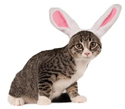 032fbd8cb7 Amazon.com   Rubie s Bunny Ears for Your Pet