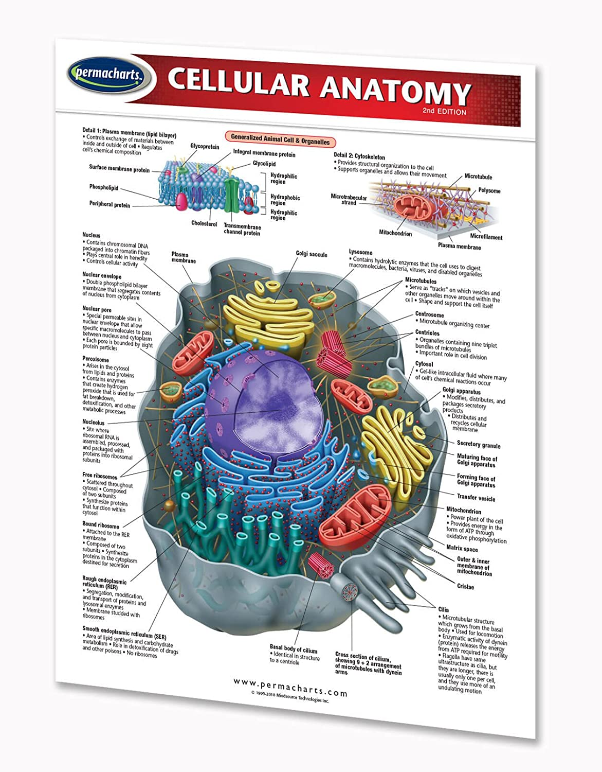 Amazon Cellular Anatomy Guide 2 Page 85 X 11 Laminated