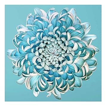 Impression Sur Verre Chrysanthème Bleu Carré 11 Image Sur Verre