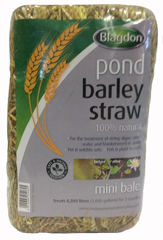 Blagdon Mini Barley Straw Bale Interpet 1054645