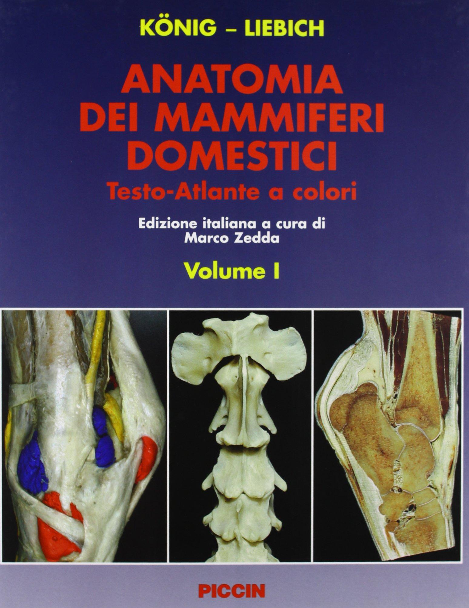 Anatomia dei mammiferi domestici (Volume I + Volume II) Copertina rigida – 31 gen 2005 Horst E. König Hans-Georg Liebich M. Zedda Piccin-Nuova Libraria