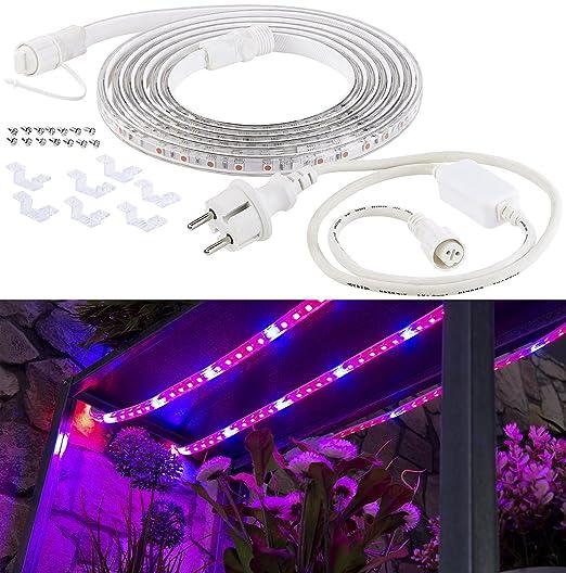 Haustierbedarf Co2 Ausstattung GüNstiger Verkauf des Pflanzenlicht Für Optimales P