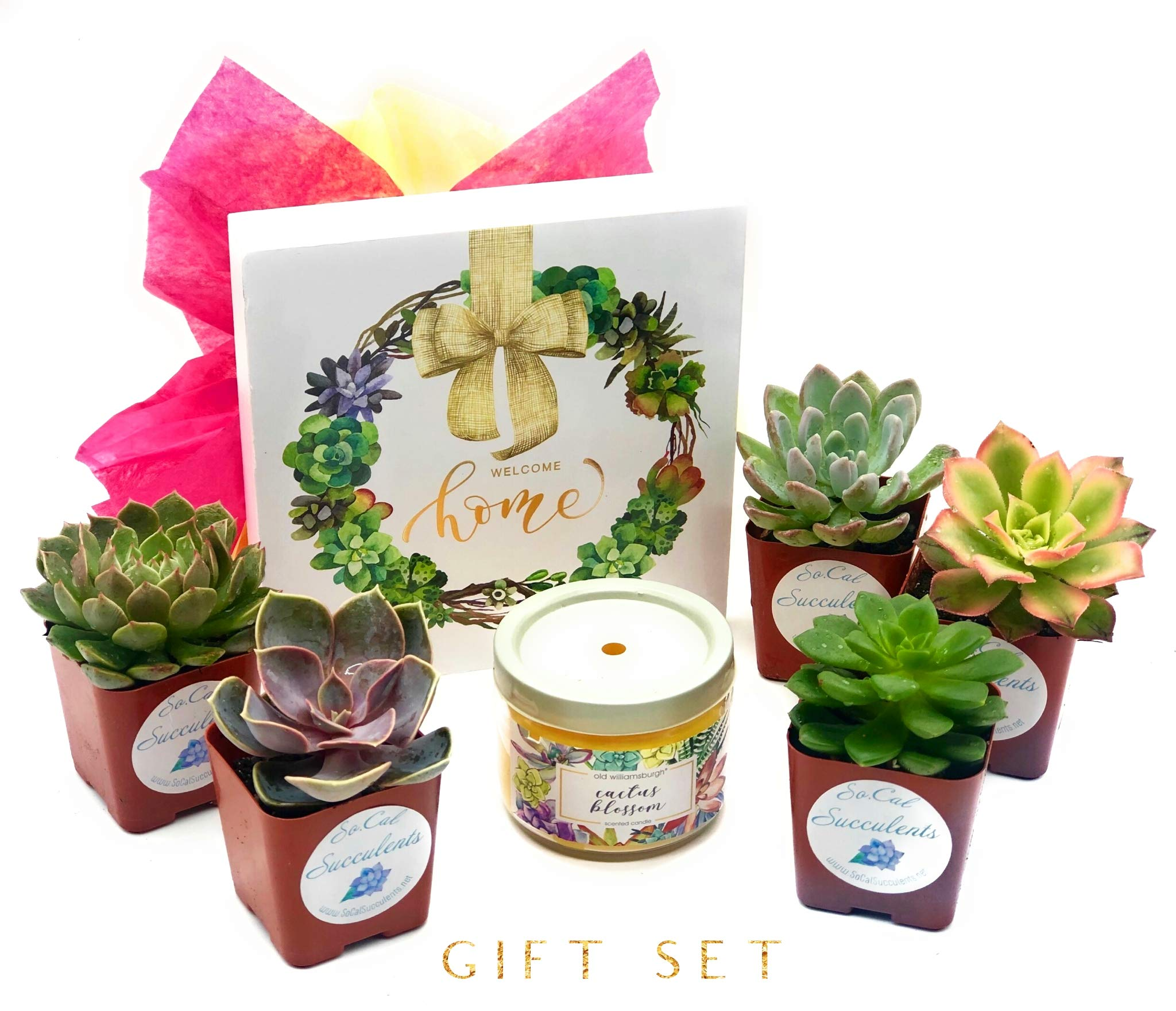 SoCal Succulents - Succulent Gift Set! 5 Assorted Succulents, a Cactus Bloom Candle, and Welcome Home Sign. Thanksgiving, Birthdays, Christmas and More! by SoCal Succulents