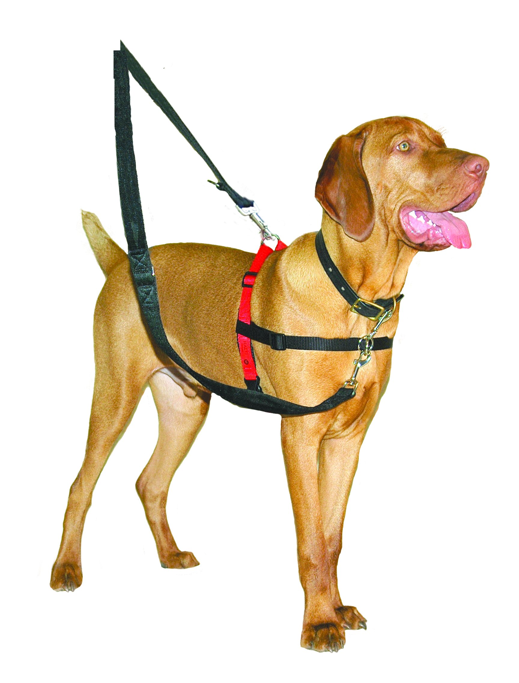 The Company of Animals - HALTI Training Harness - Durable and Adjustable - Comfortable Padded fit - Medium - Black & Red by The Company of Animals (Image #4)