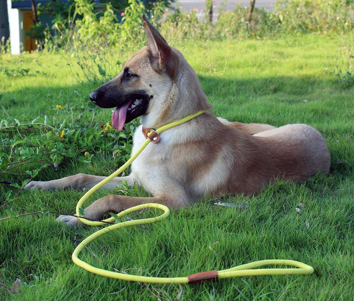 lynxking Braided Rope Dog Leash Strong Heavy Duty Bite Resistant Dog Rope Slip Leads UHMWPE Chew Resistant Training Lead Leashes Medium Large Dogs (3/8'' x5', Yellow) by lynxking (Image #4)