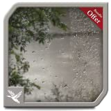 Kyпить Wet Rainy Jungle HD - Free Romantic Theme for TV & Fire Devices на Amazon.com