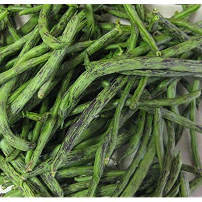 Rattlesnake Pole Bean Seeds- Heirloom Variety- 30+ Seeds : Garden & Outdoor