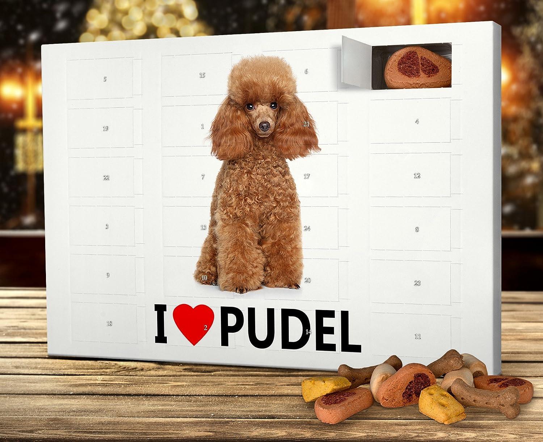 Weihnachtskalender Für Hunde.Printplanet Hunde Adventskalender Mit Leckerlis Motiv I Love Pudel
