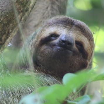 Cute Sloth Wallpaper HD Wallpapers Of Sloths