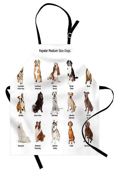 Amazon.com: Ambesonne perro delantal, diseño de grupo de ...