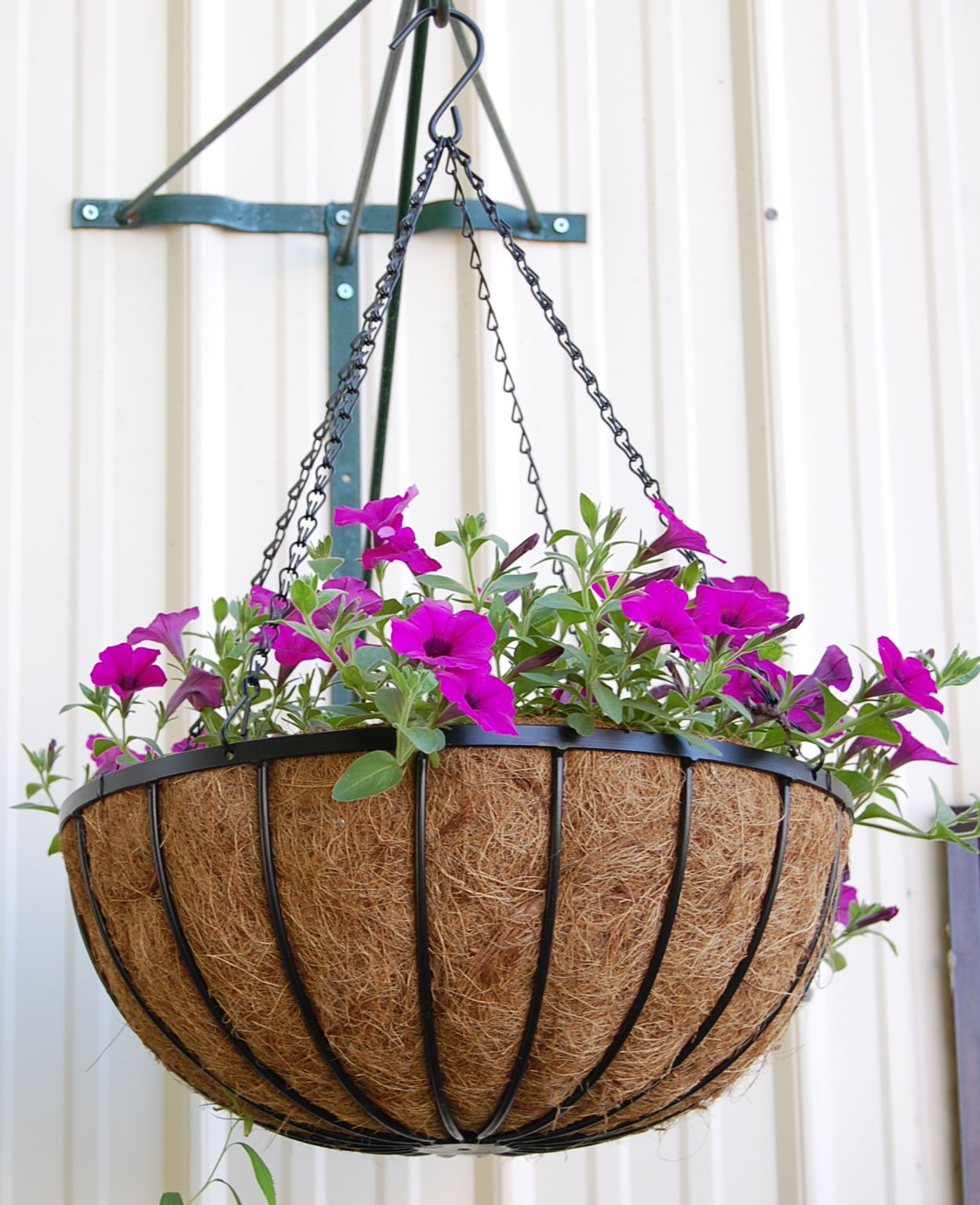 24'' Georgian Rigid Iron Hanging Basket (C960-5) with Coco Moss Liner - 5 Set Pack by Topiary Art Works