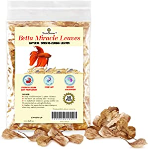 SunGrow Indian Almond Leaves, Best Way to Create Tropical Rainforest Environment for Betta & Gouramis, Beneficial Leaf Conditions Water
