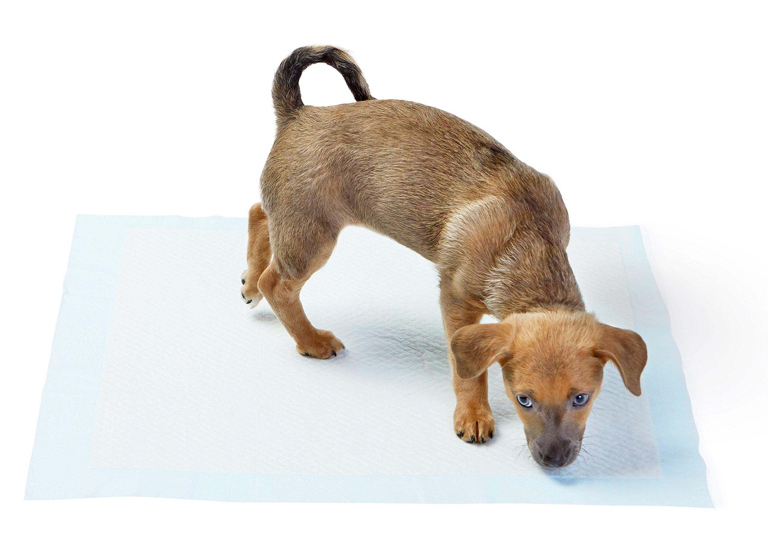 AmazonBasics Pet Training and Puppy Pads, Regular - 150 Count by AmazonBasics (Image #2)