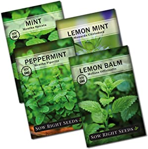 Sow Right Seeds - Mint Garden Seed Collection - Peppermint, Common Mint, Lemon Mint, and Lemon Balm; Non-GMO Heirloom Seeds with Instructions for Planting Indoors or Outdoors; Great Gardening Gifts