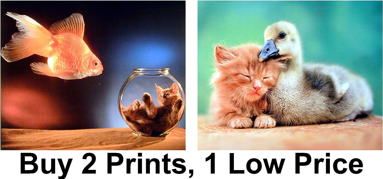 8x10 In Tiny Kitten in a Glass Photo Art Print