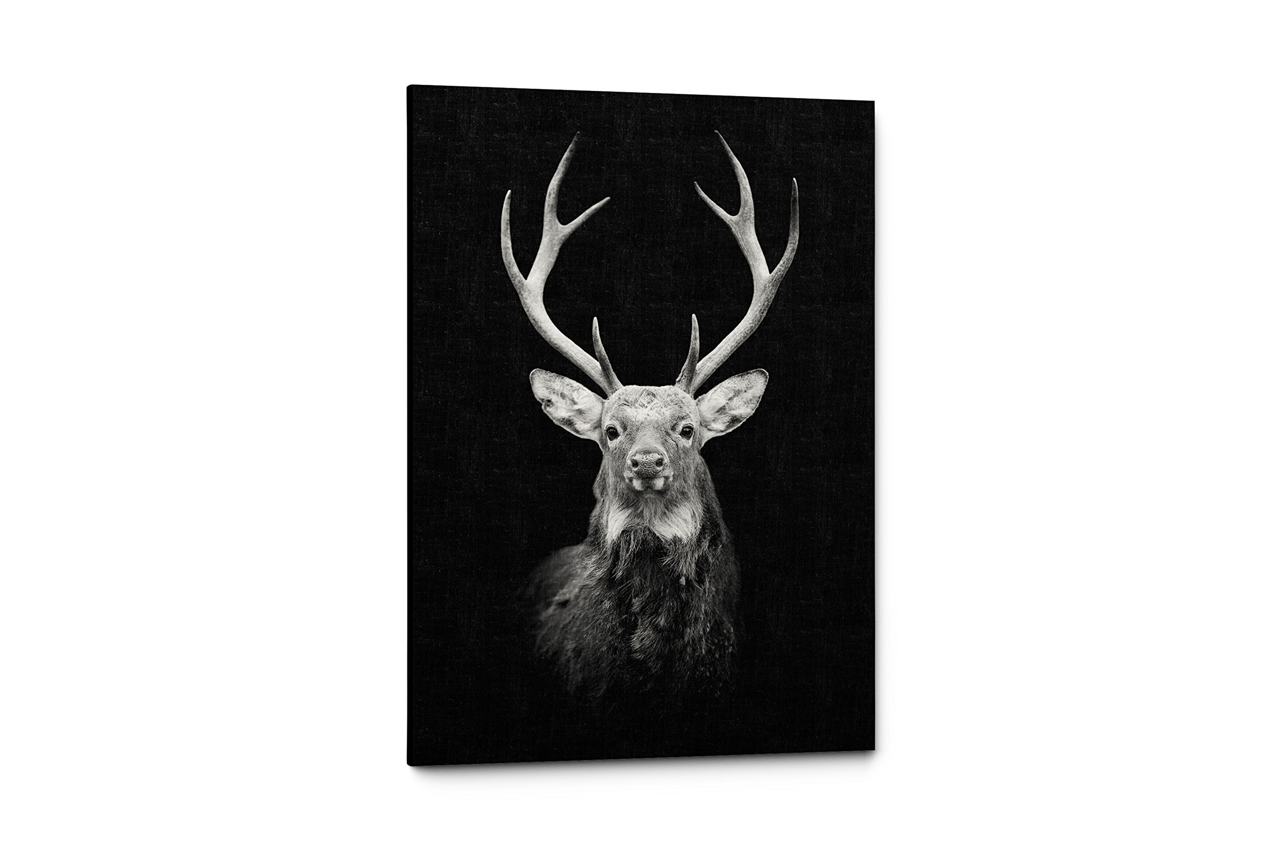 Black And White Animals Photography Canvas Wall Art Prints (11''W x 17''H, Tranquil Deer)