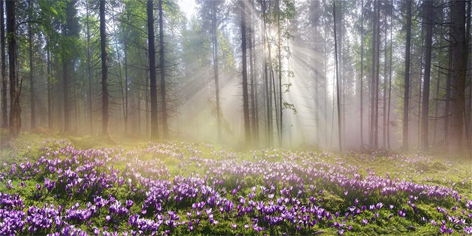 GoHeBe 10x5ft Morning Misty Forest Scenic Backdrop Vinyl Sunshine Light Beams Go Through The Lush Wood Purple Flowers Field Background Nature Scenery Landscape Birthday Party Banner Kids Shoot