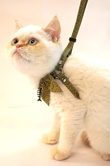 Amazon.com: Necoichi Zen - Juego de arnés y correa para gato ...
