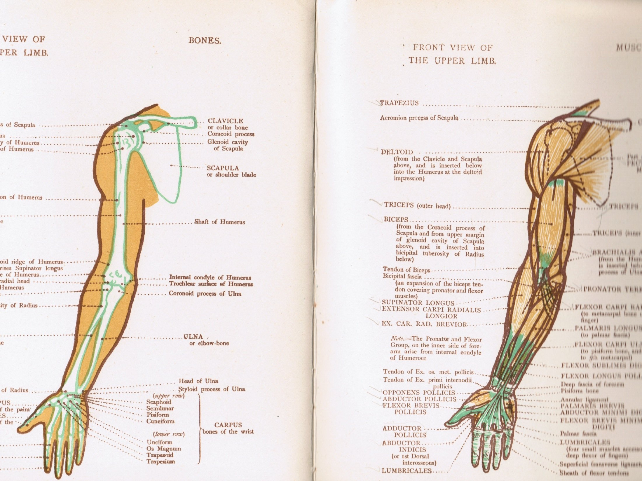 Anatomical Diagrams For The Use Of Art Students Amazon James