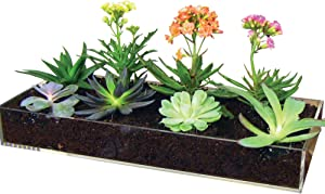 Window Garden Multi-Use Acrylic Planter Tray + Fiber Soil + Sprayer = Gorgeous Succulent, Dish and Herb Gardens | Grow Microgreens, Wheatgrass Seed | Table Centerpiece | Drip Tray | Fairy Gardens.